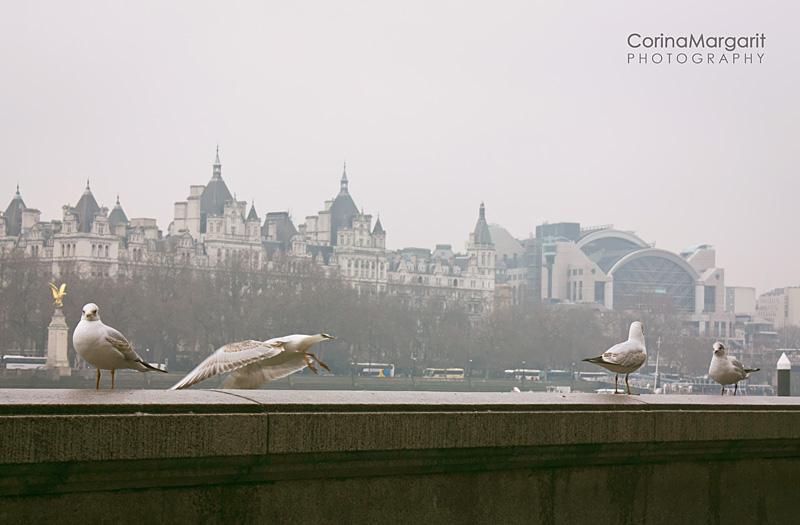 LONDON photo by CORINA MARGARIT (17)